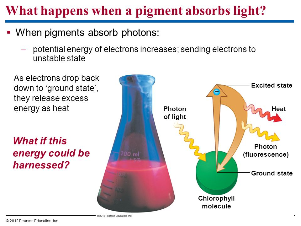 What happens when a pigment absorbs light
