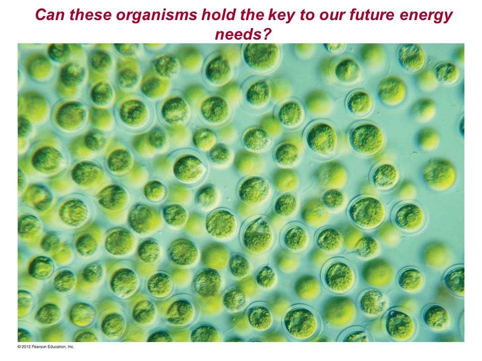 Can these organisms hold the key to our future energy