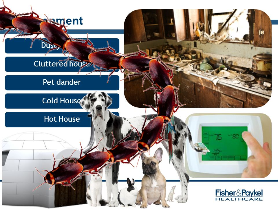 Environment Dusty house Cluttered house Pet dander Cold House