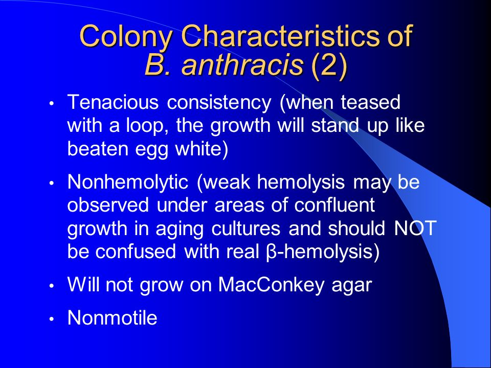 Colony Characteristics of B. anthracis (2)