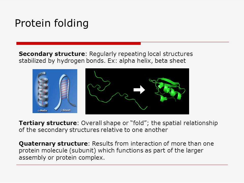 Protein folding Secondary structure: Regularly repeating local structures stabilized by hydrogen bonds. Ex: alpha helix, beta sheet.