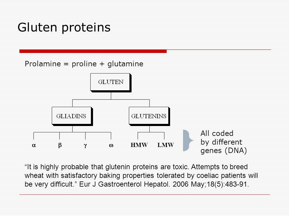 Gluten proteins Prolamine = proline + glutamine All coded by different
