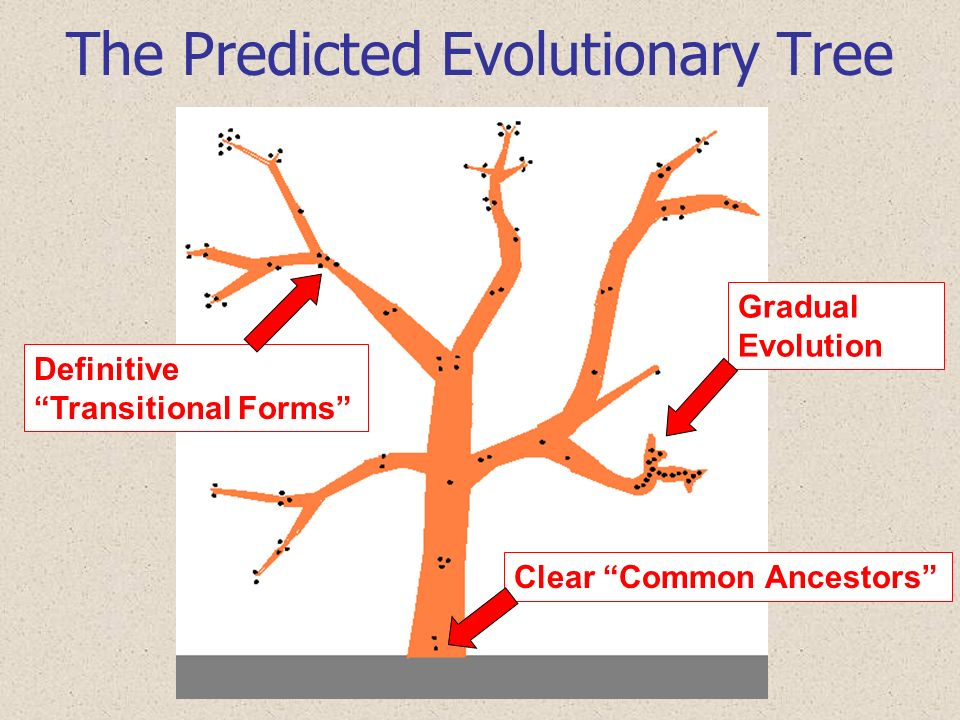 The Predicted Evolutionary Tree