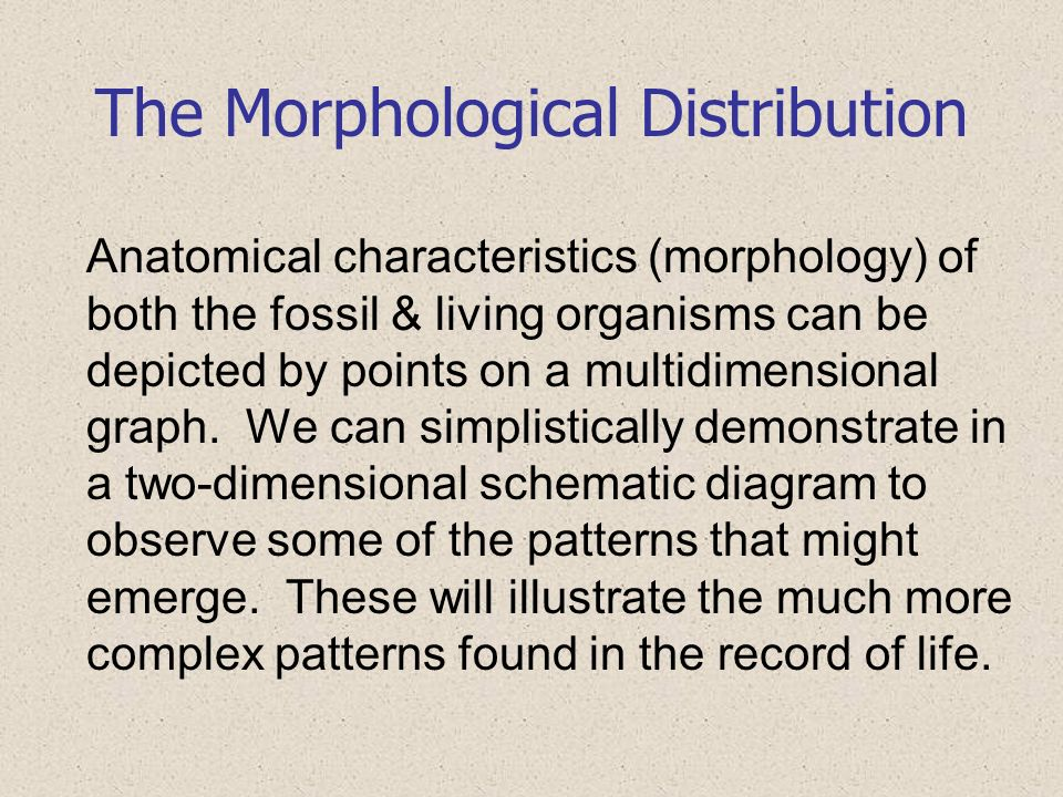 The Morphological Distribution