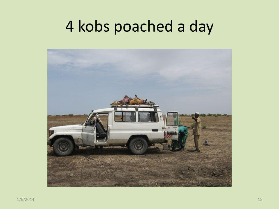 4 kobs poached a day 3/25/2017