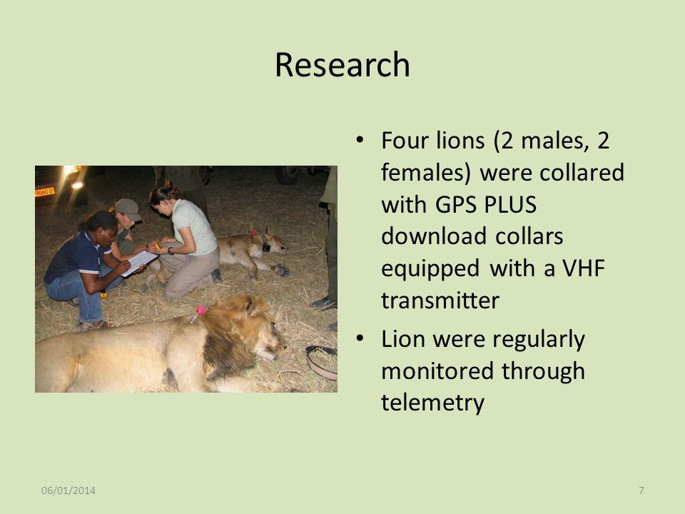 Research Four lions (2 males, 2 females) were collared with GPS PLUS download collars equipped with a VHF transmitter.