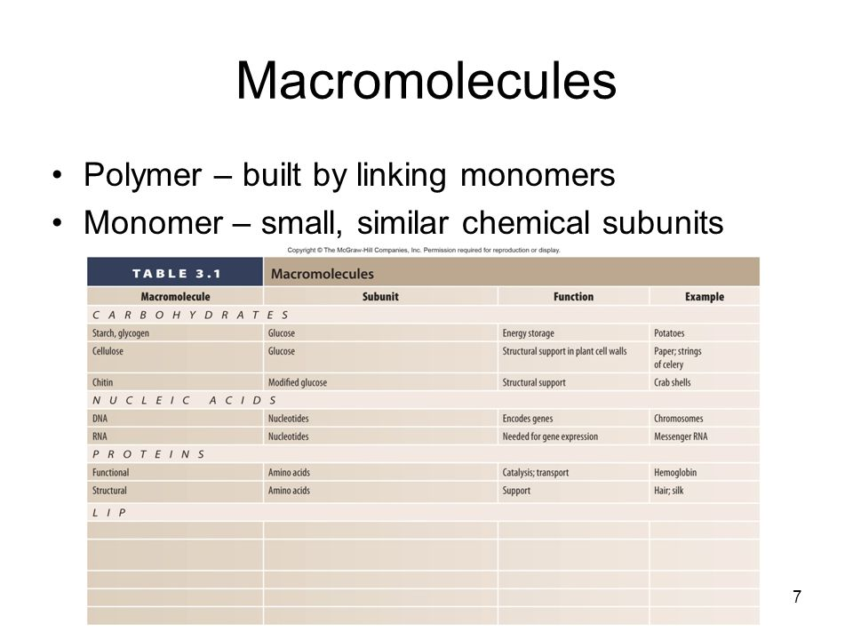 Macromolecules Polymer – built by linking monomers