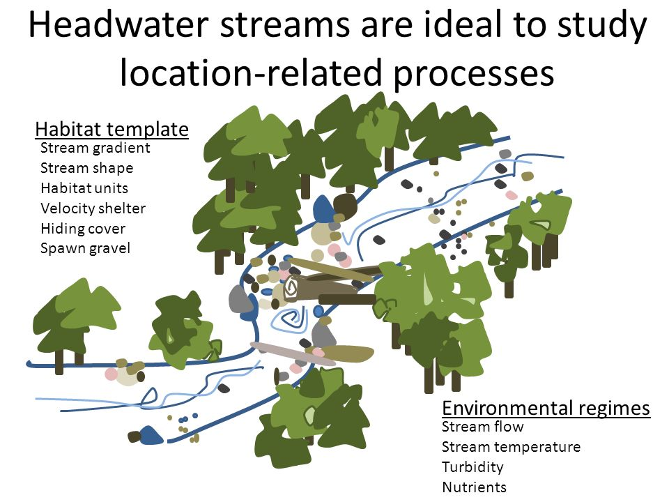 Headwater streams are ideal to study location-related processes