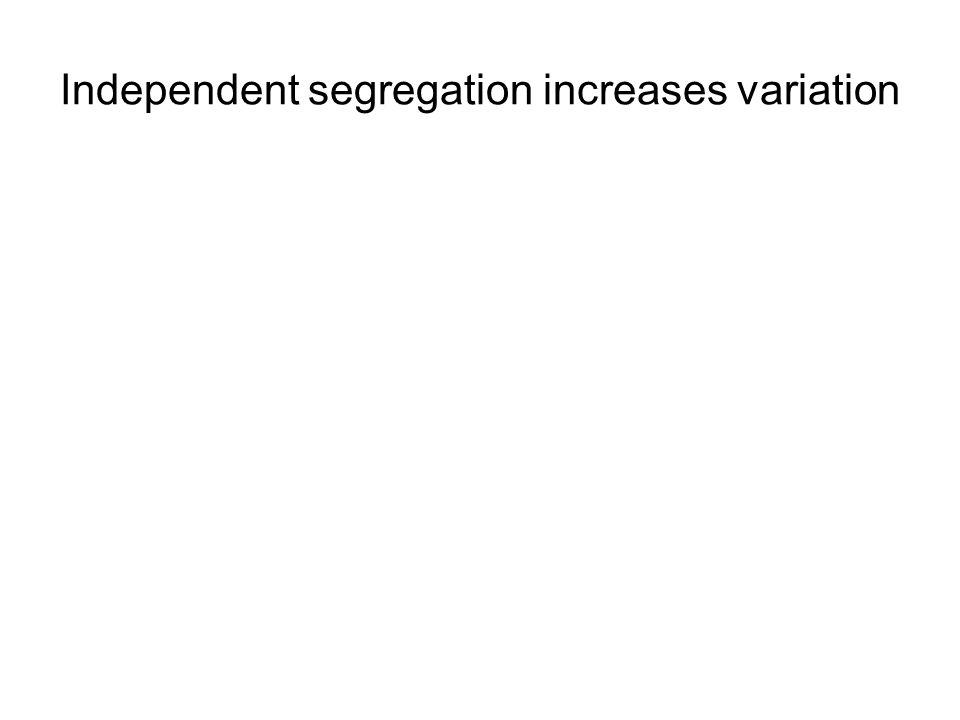 Independent segregation increases variation