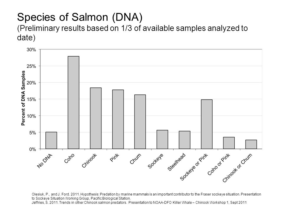 Species of Salmon (DNA) (Preliminary results based on 1/3 of available samples analyzed to date)