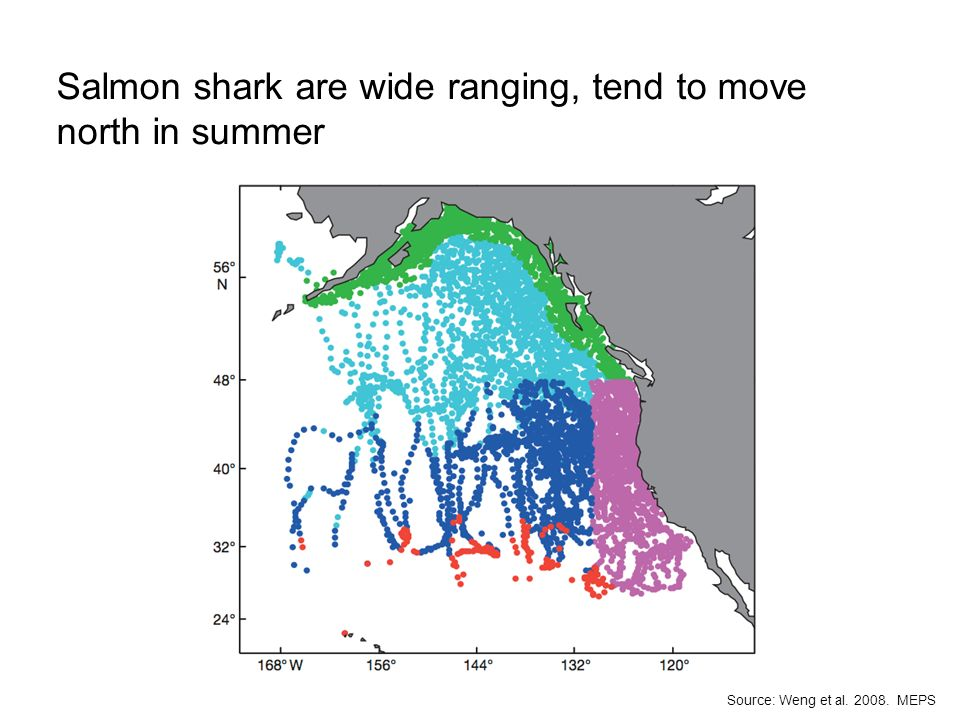 Salmon shark are wide ranging, tend to move north in summer