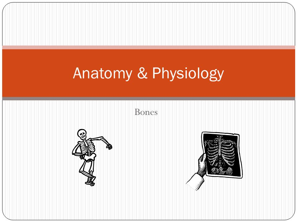 Anatomy & Physiology Bones