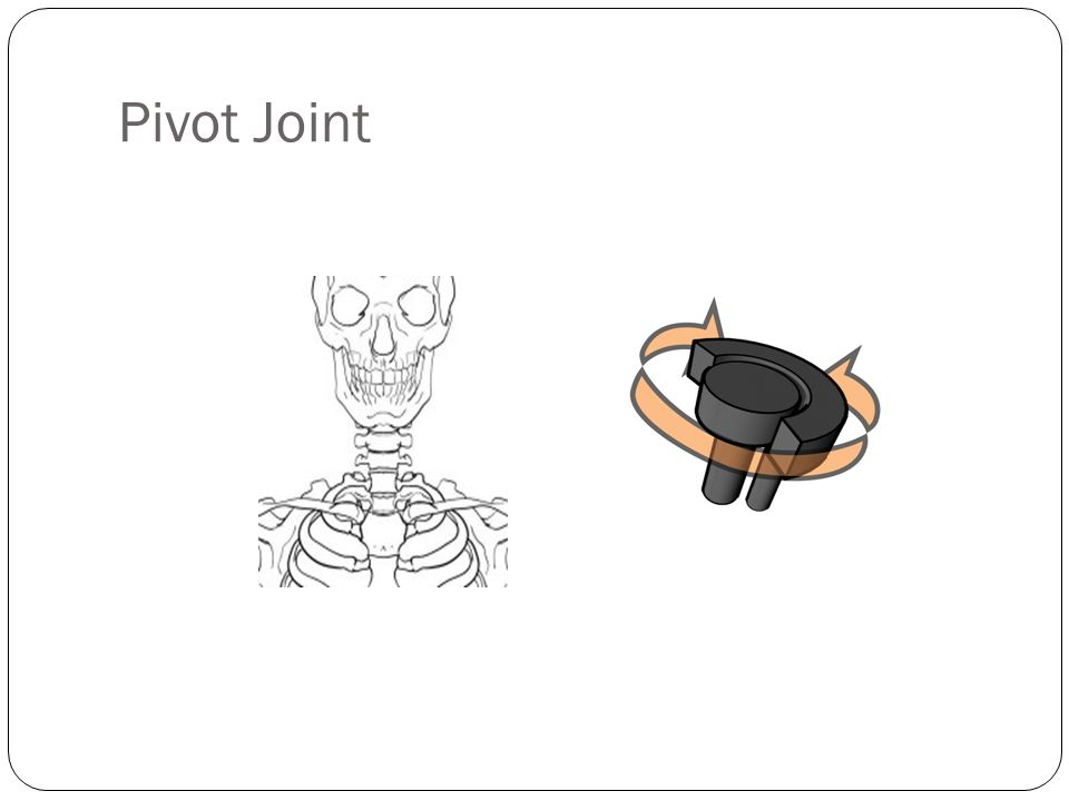 Pivot Joint Pivot allows Rotation of one bone around another – Your neck