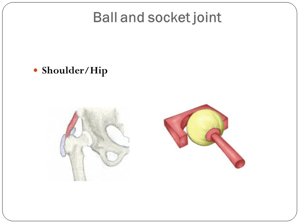 Ball and socket joint Shoulder/Hip