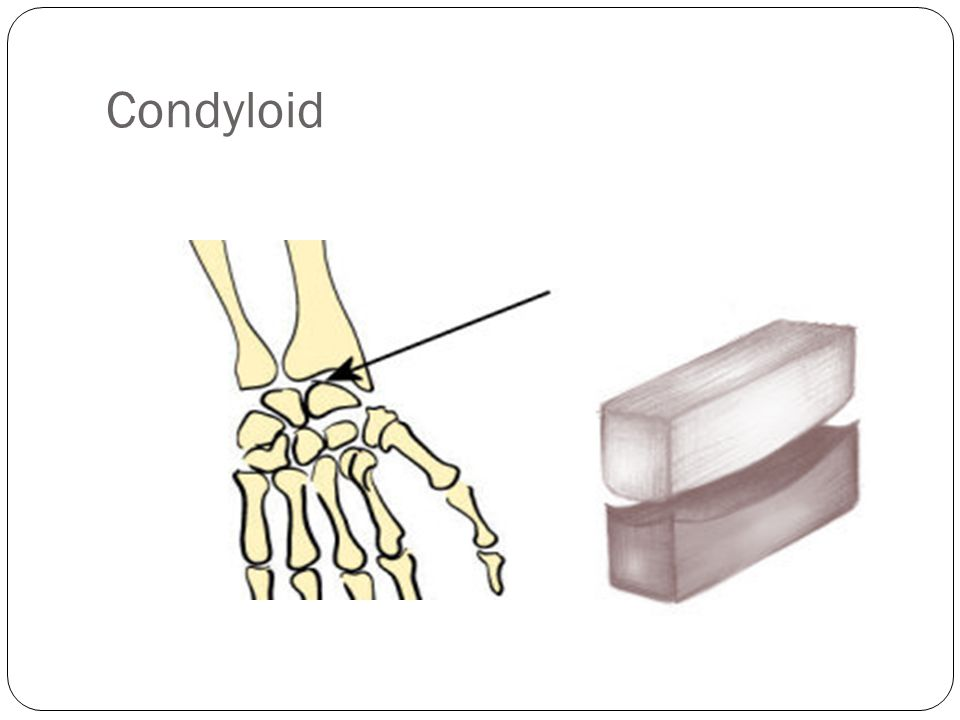 Condyloid Con-de-loid- - This joint allows you to move up and down- As in your wrist, you can't move it sideways.