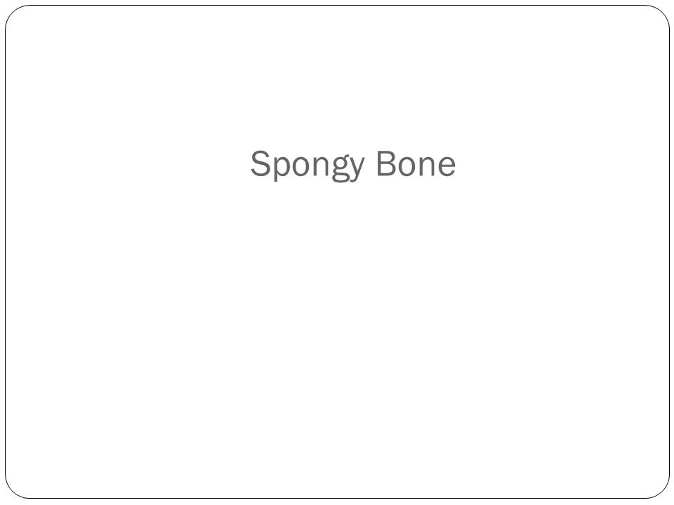 Spongy Bone How'd you do