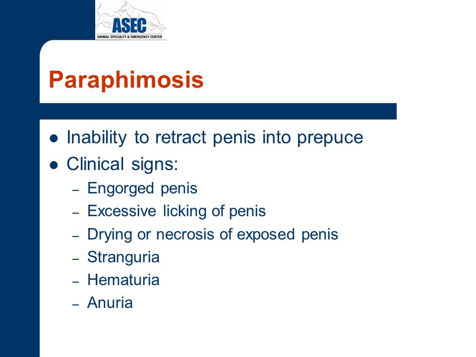 Paraphimosis Inability to retract penis into prepuce Clinical signs: