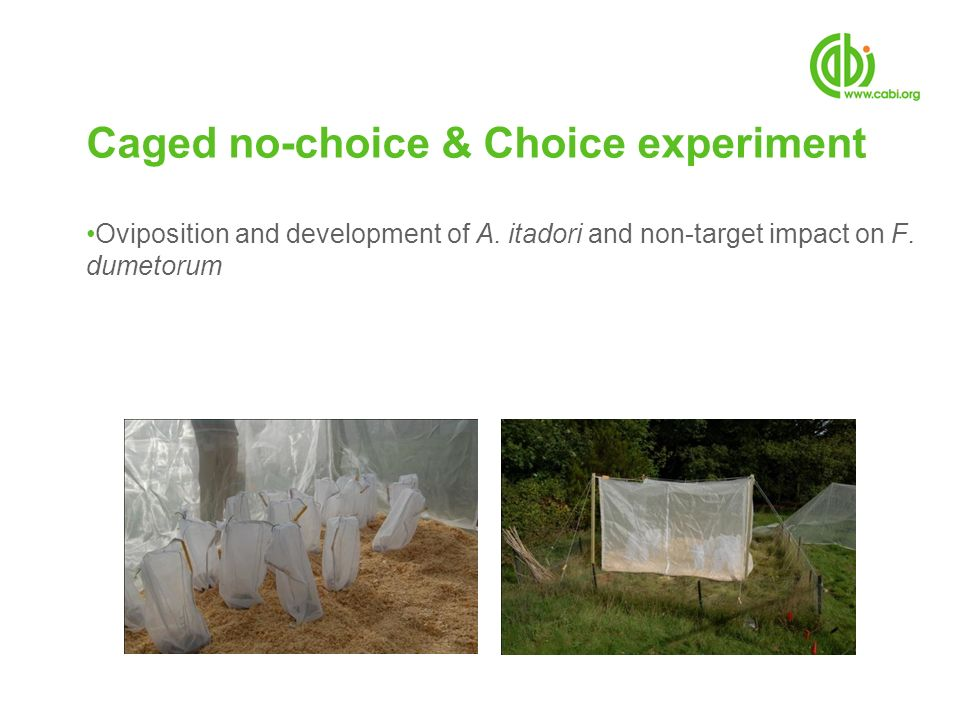 Caged no-choice & Choice experiment
