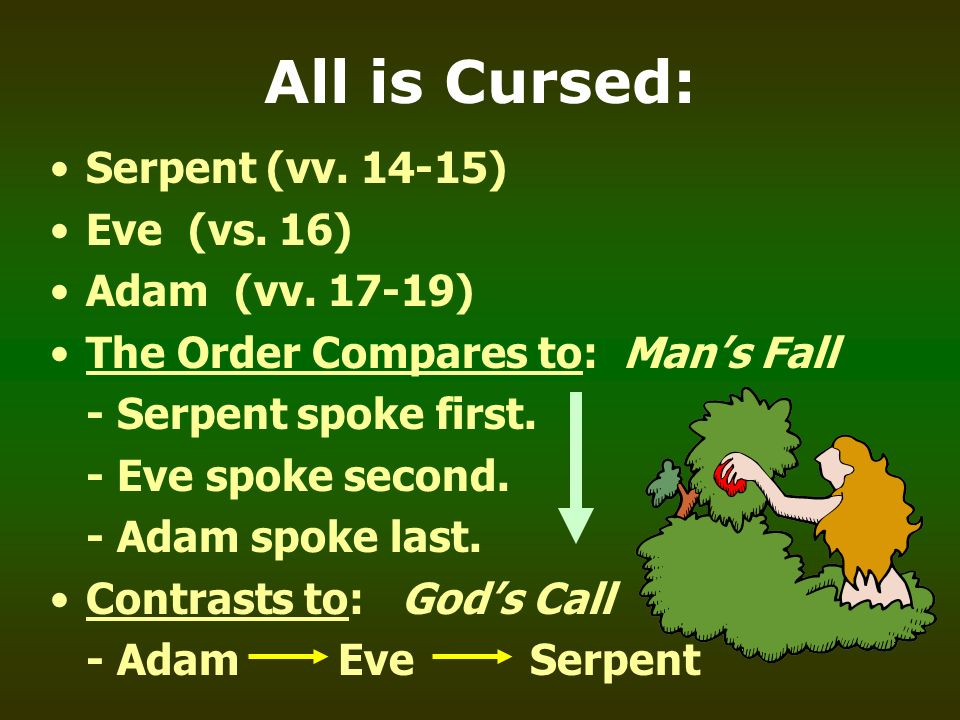 All is Cursed: Serpent (vv ) Eve (vs. 16) Adam (vv )