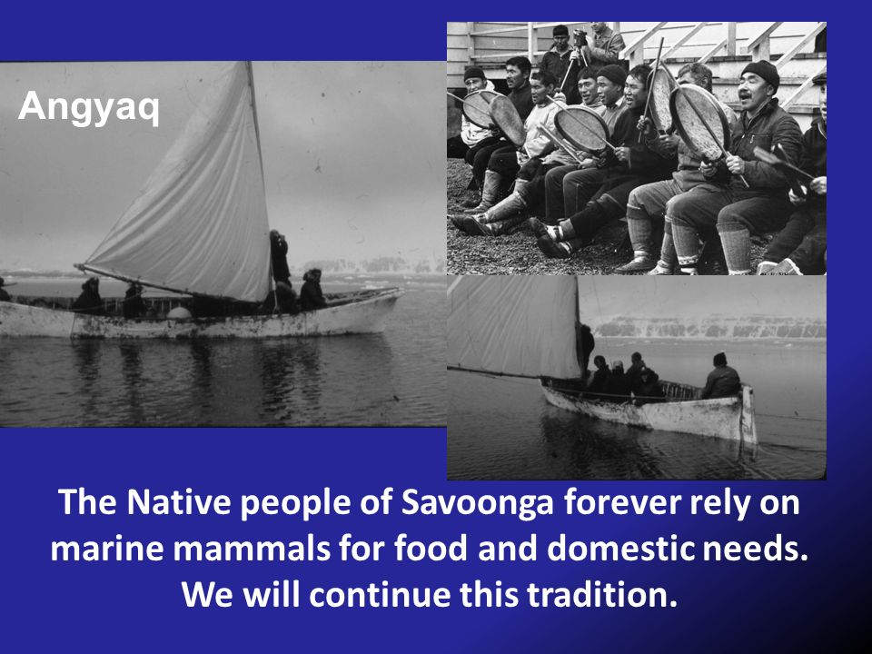 Angyaq The Native people of Savoonga forever rely on marine mammals for food and domestic needs.