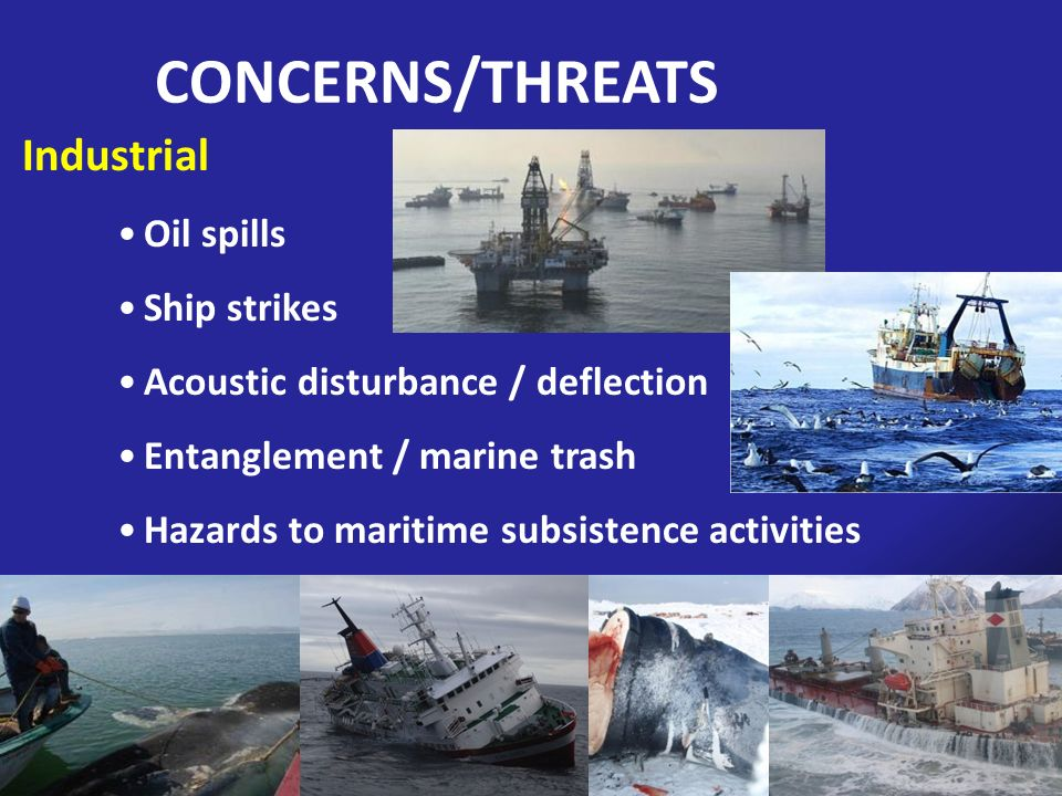 CONCERNS/THREATS Industrial Oil spills Ship strikes