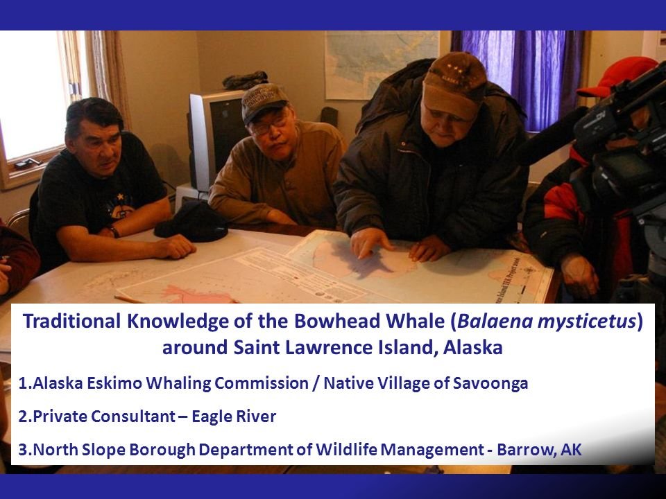 Traditional Knowledge of the Bowhead Whale (Balaena mysticetus) around Saint Lawrence Island, Alaska