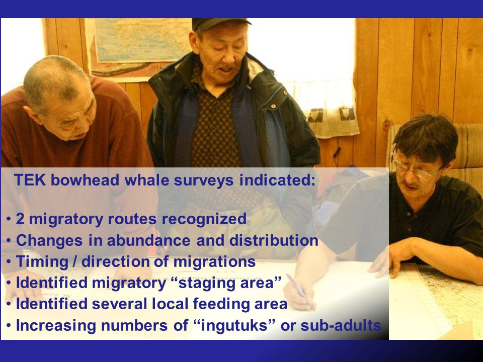 TEK bowhead whale surveys indicated: