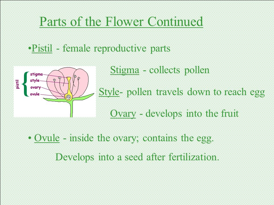 Parts of the Flower Continued