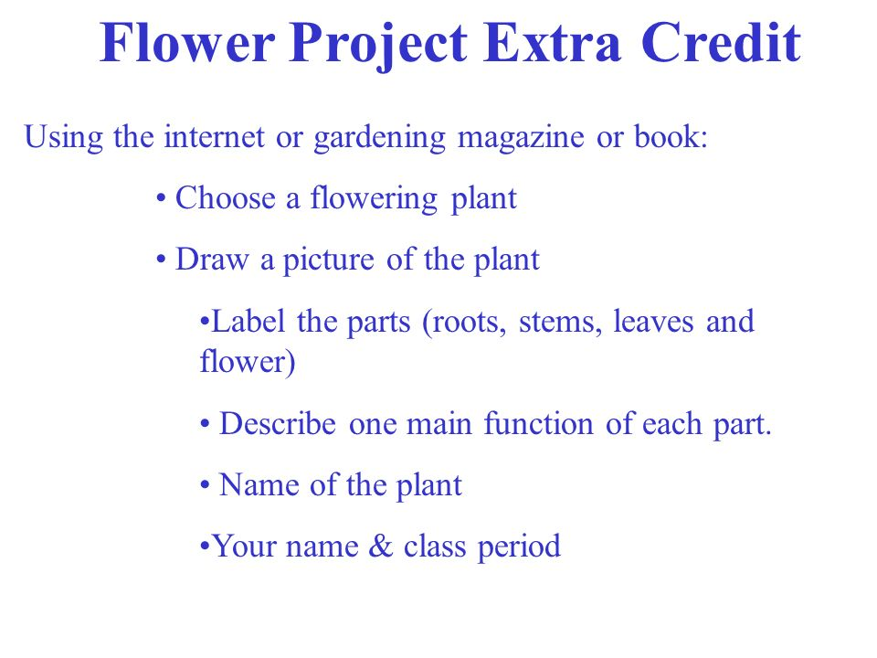 Flower Project Extra Credit