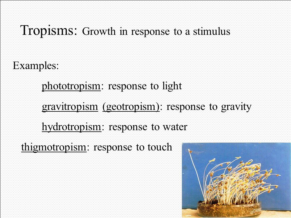Tropisms: Growth in response to a stimulus