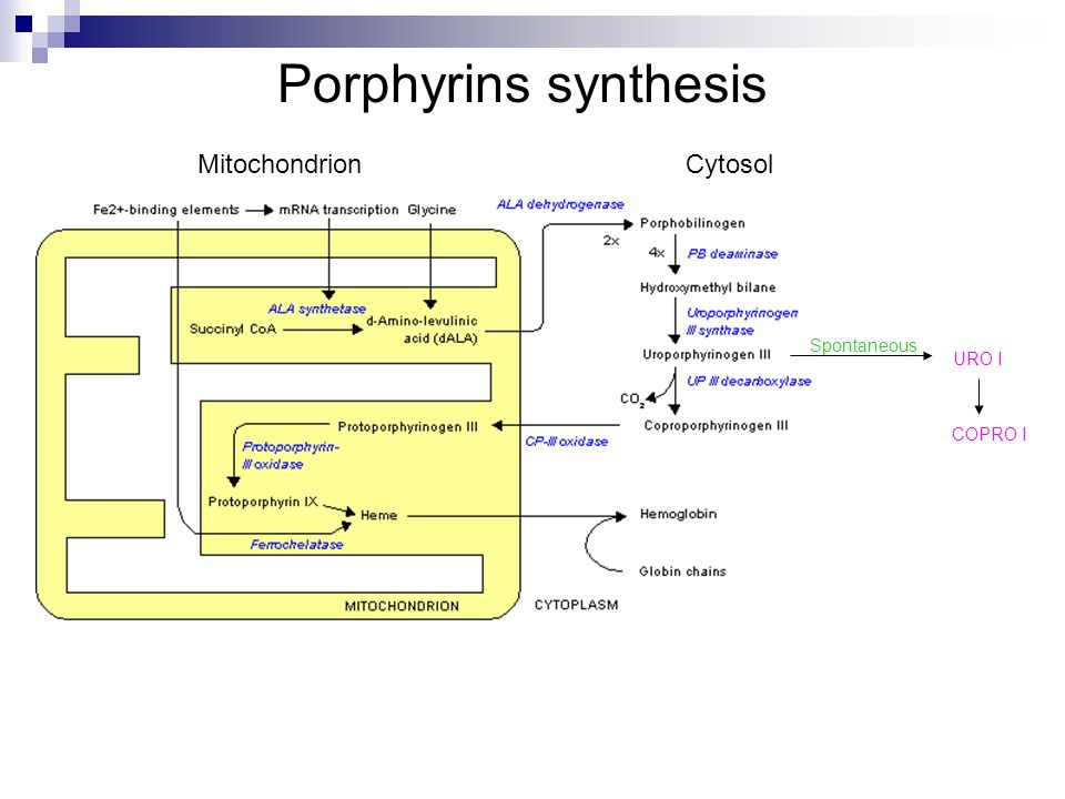 Porphyrins synthesis Mitochondrion Cytosol Spontaneous URO I COPRO I