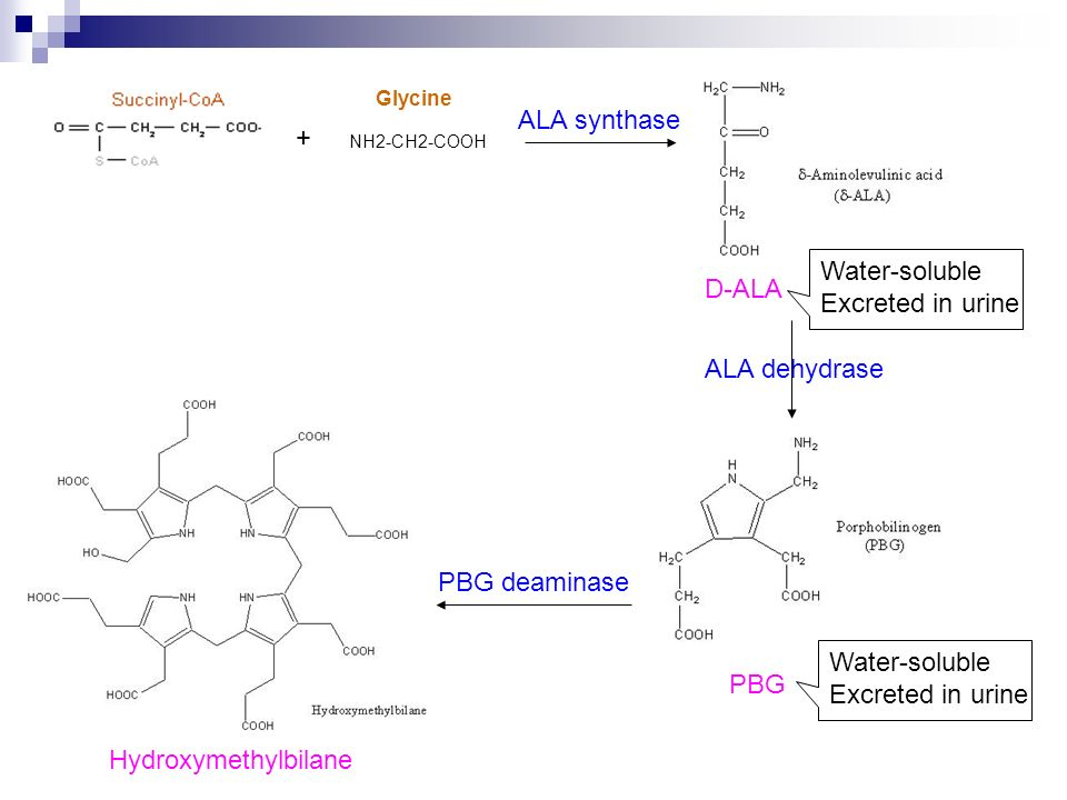 ALA synthase + Water-soluble D-ALA Excreted in urine ALA dehydrase