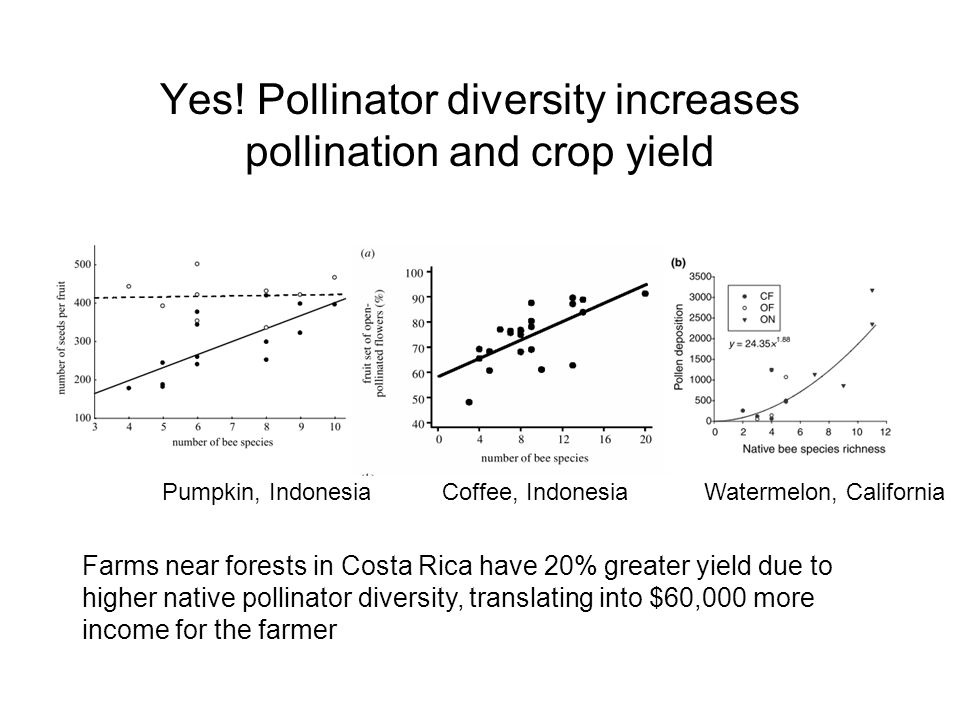 Yes! Pollinator diversity increases pollination and crop yield