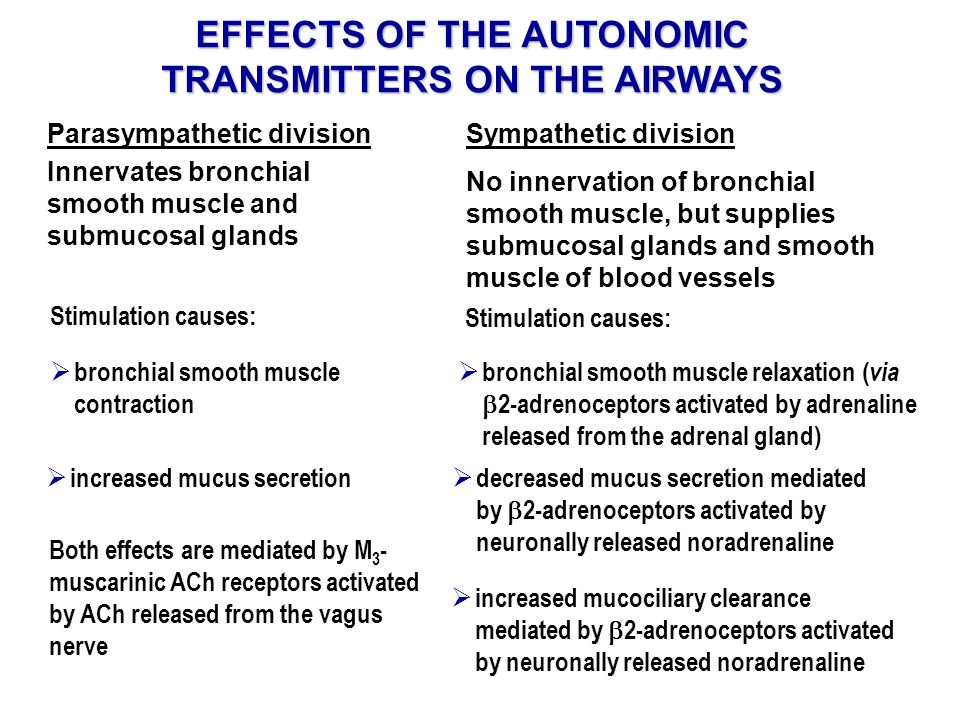 EFFECTS OF THE AUTONOMIC TRANSMITTERS ON THE AIRWAYS