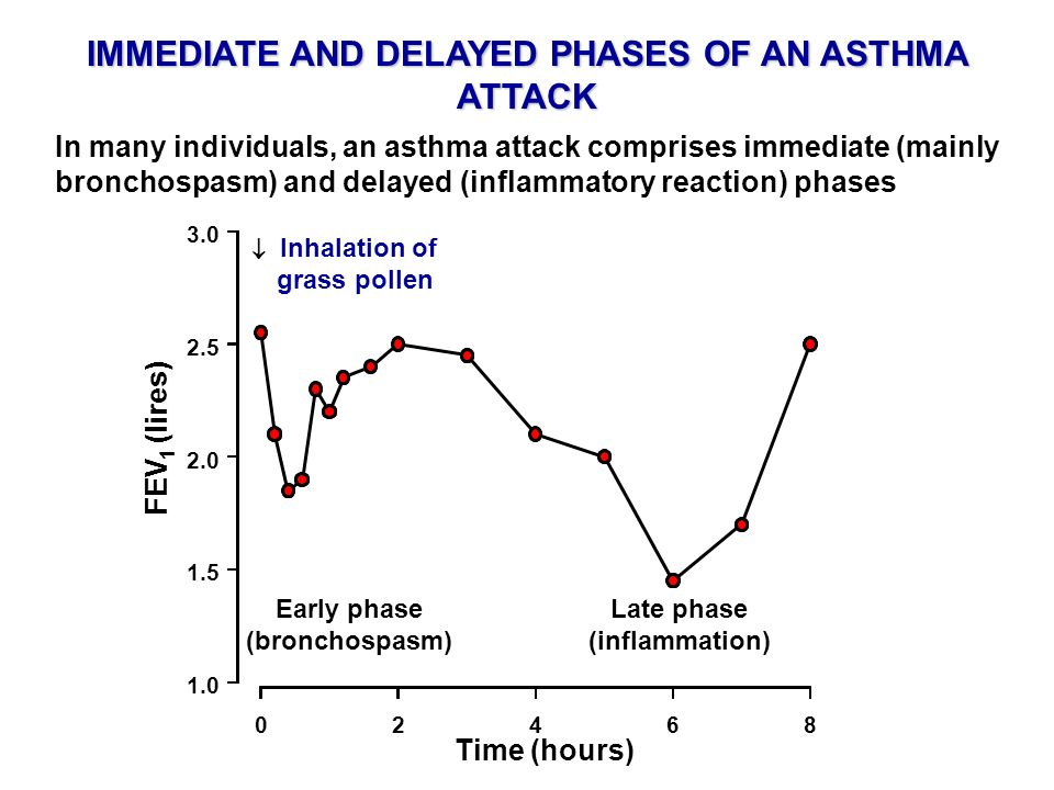 IMMEDIATE AND DELAYED PHASES OF AN ASTHMA ATTACK