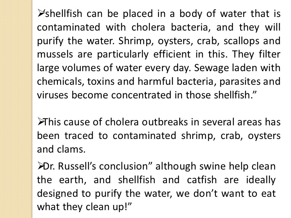 'shellfish can be placed in a body of water that is contaminated with cholera bacteria, and they will purify the water. Shrimp, oysters, crab, scallops and mussels are particularly efficient in this. They filter large volumes of water every day. Sewage laden with chemicals, toxins and harmful bacteria, parasites and viruses become concentrated in those shellfish.