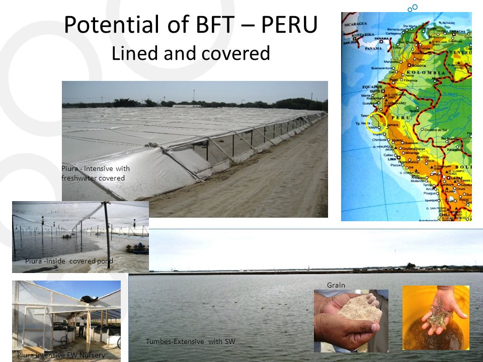 Potential of BFT – PERU Lined and covered