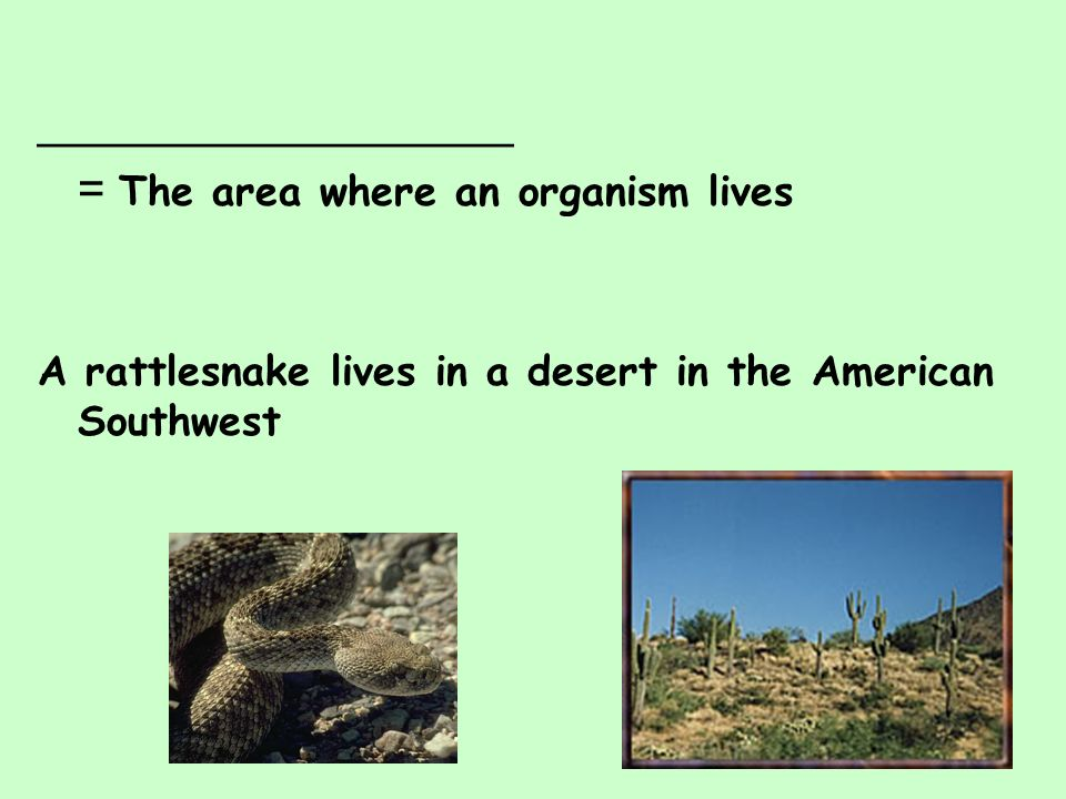 = The area where an organism lives