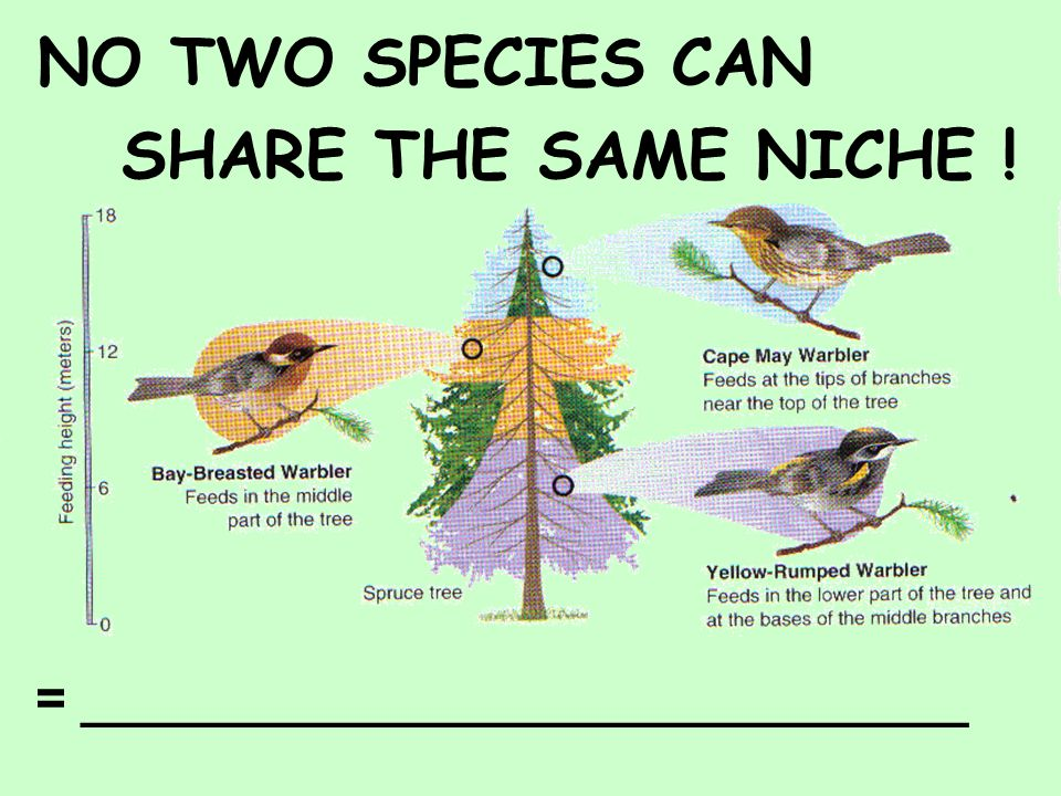 NO TWO SPECIES CAN SHARE THE SAME NICHE !