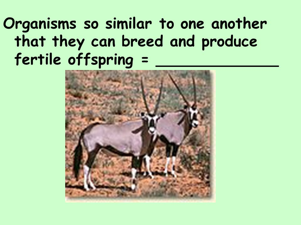 Organisms so similar to one another that they can breed and produce fertile offspring = _____________