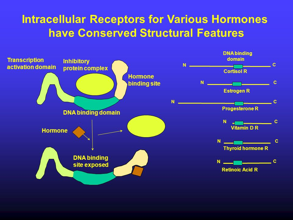 Intracellular Receptors for Various Hormones