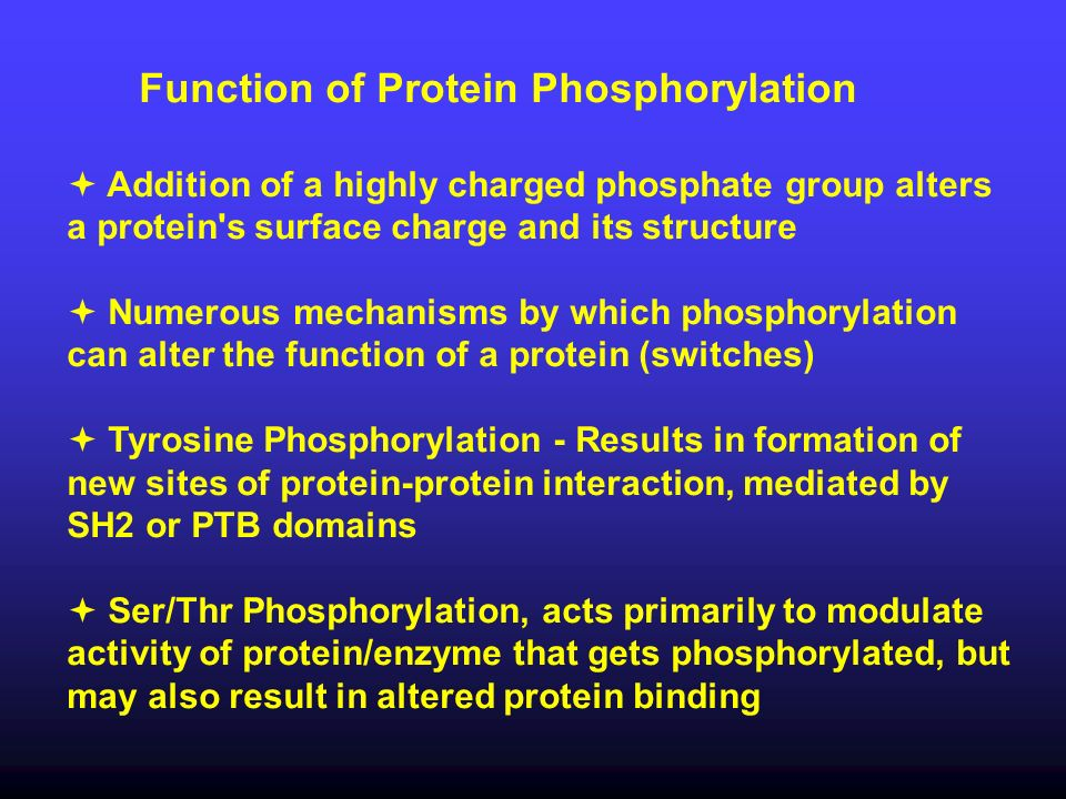 Function of Protein Phosphorylation