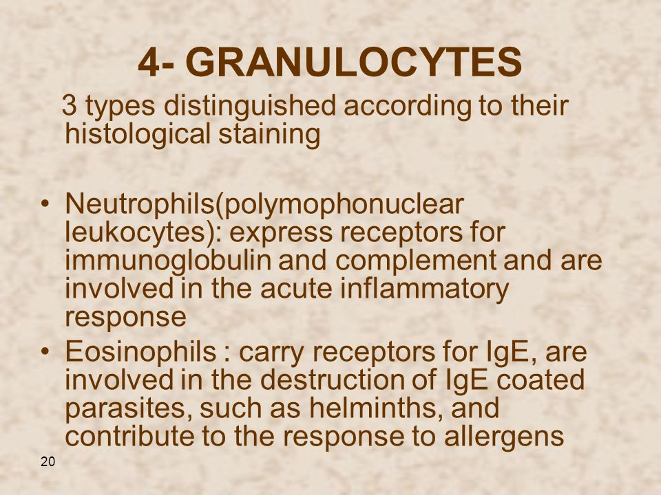 4- GRANULOCYTES 3 types distinguished according to their histological staining.