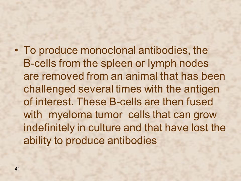 To produce monoclonal antibodies, the B-cells from the spleen or lymph nodes are removed from an animal that has been challenged several times with the antigen of interest.