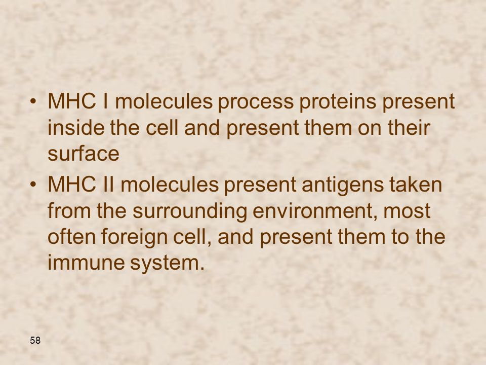 MHC I molecules process proteins present inside the cell and present them on their surface
