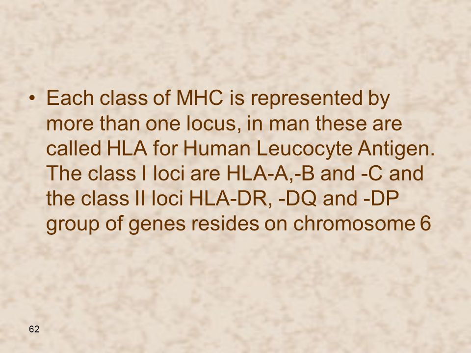 Each class of MHC is represented by more than one locus, in man these are called HLA for Human Leucocyte Antigen.
