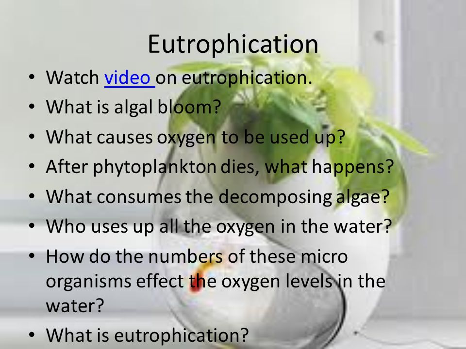Eutrophication Watch video on eutrophication. What is algal bloom