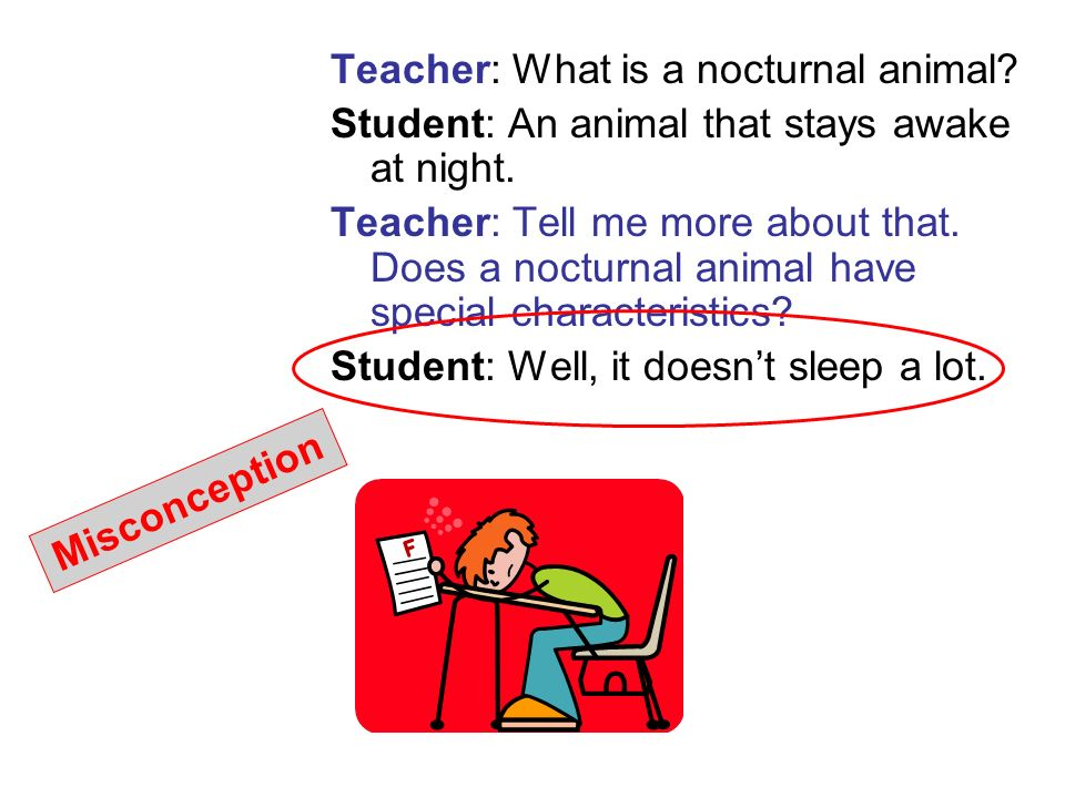 Teacher: What is a nocturnal animal