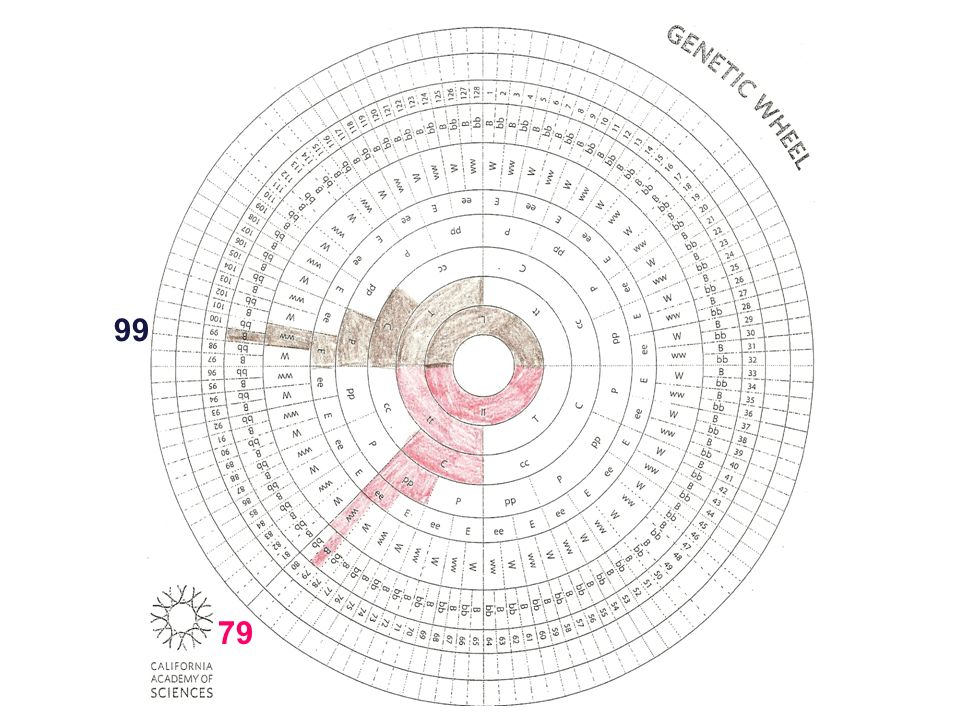 99 Genetic wheel with two people's information filled in 79