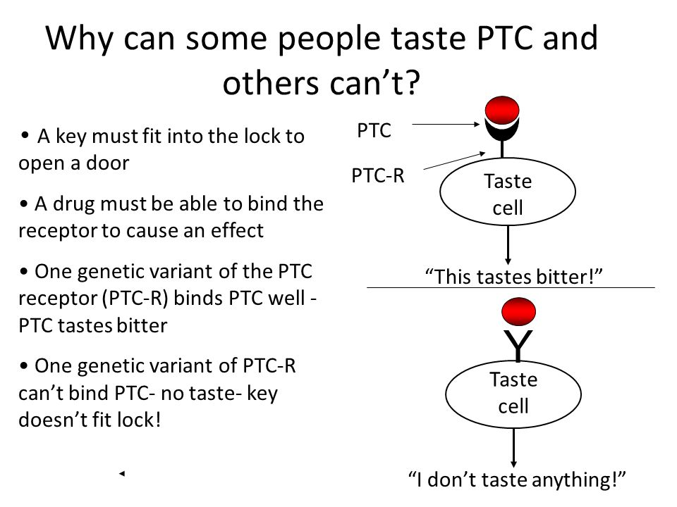 Why can some people taste PTC and others can't